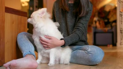 Pet owner brushing her pomeranian dog at home