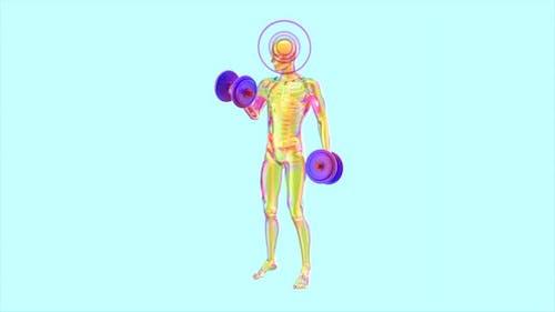 Anatomie eines Röntgenmanns beim Bizeps Curls