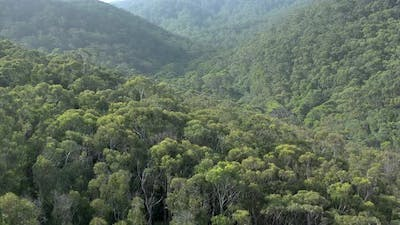 Flyover of the Australian Forests on the South Coast