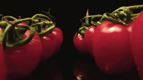 fly by red tomatoes