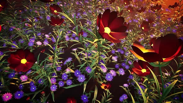 Thumbnail for Flower Field Loop #02
