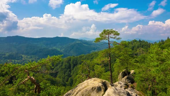 Thumbnail for Mountain Landscape with Pine Trees Growing on Rock