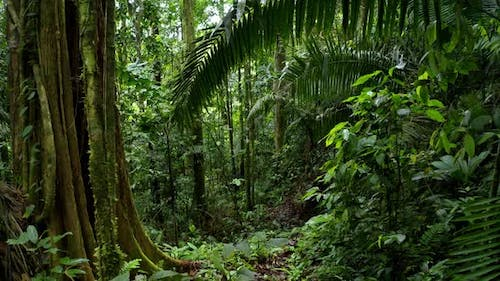 Moving through a tropical forest with a large tree and a lush coloration