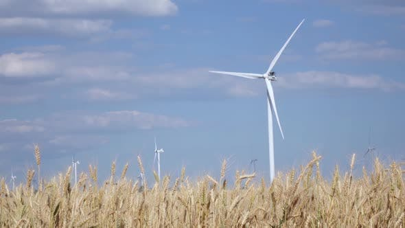 Thumbnail for Rotating Wind Turbines in the Field of Ripening Young Wheat