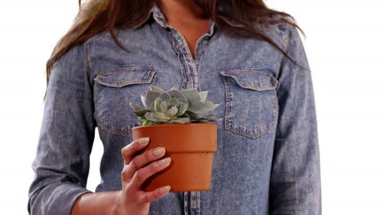 Thumbnail for Close up of Hispanic woman in casual shirt holding small cactus in studio