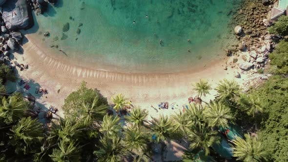 Thumbnail for Flying Above Palm Tree Beach