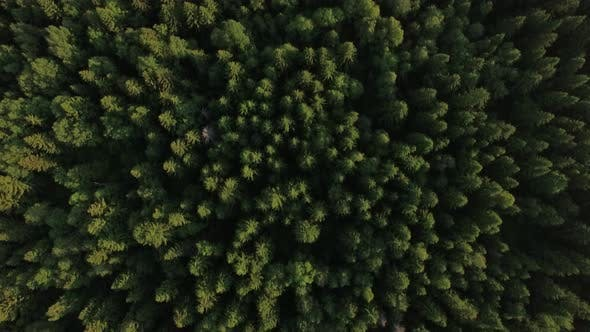 Thumbnail for Flying Over Green Forest and Village Near the Road, Russia