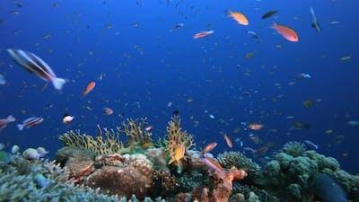 Marine Tropical Garden