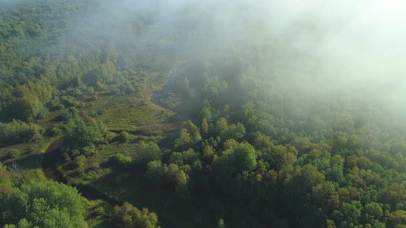 Thumbnail for Forest and River at Sunrise Aerial