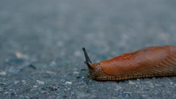Thumbnail for Crawling Slug On The Road