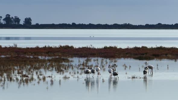 Group flamingos walking around the wetlands