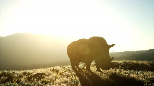 Thumbnail for Rhino Standing in Open Area During Sunset