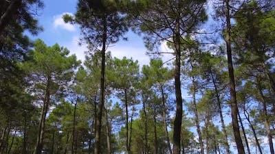 Green Jungle Trees Blue Sky