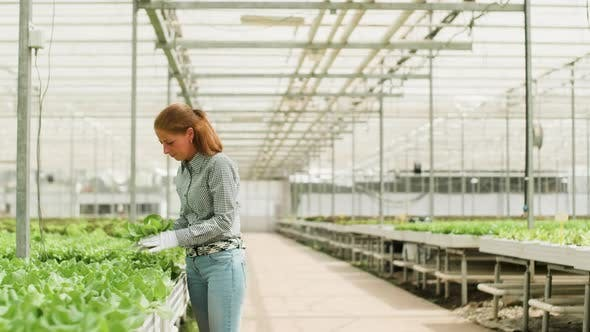 Female Agronomist in a Greenhouse with Modern Irrigation System
