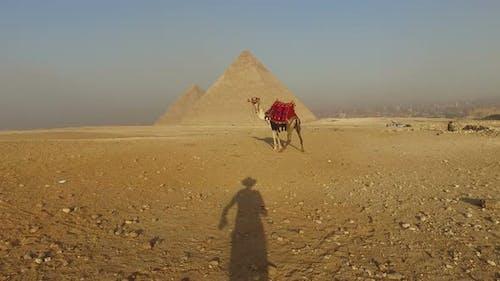 Man's shadow approaching to camel at Giza pyramids