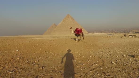 Thumbnail for Man's shadow approaching to camel at Giza pyramids