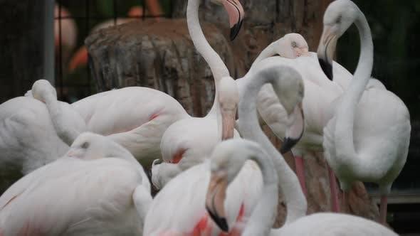 Herde von schönen Flamingos in natürlicher Umgebung