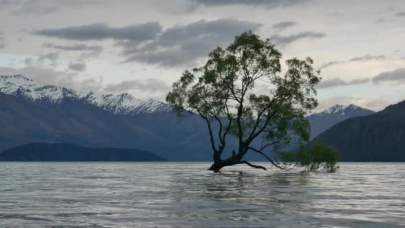 Famous Wanaka Tree in morning