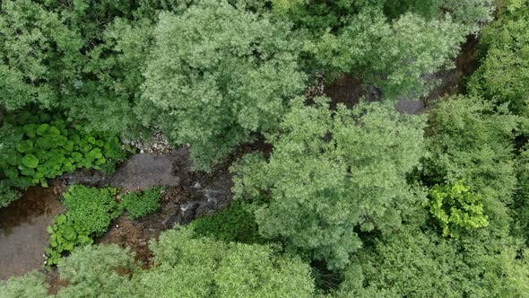 Thumbnail for Forest with Stream Aerial