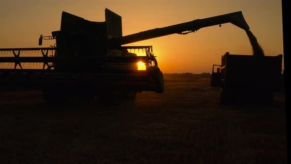 Thumbnail for Silhouette of Combine Harvester Pours Out Wheat Into the Truck at Sunset. Harvesting Grain Field