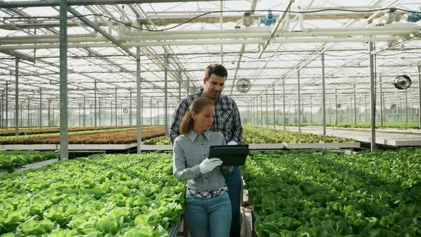 Cover Image for Agronomy Engineers in a Greenhouse Checking the Crop
