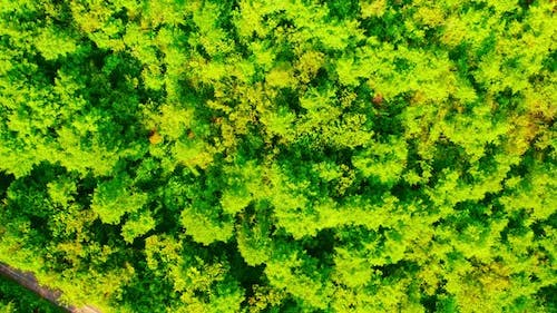 Aerial View on Tree Tops Greenwood