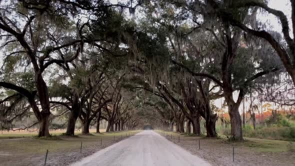Thumbnail for Driving down a road lined with Live Oak trees in Savannah Georgia