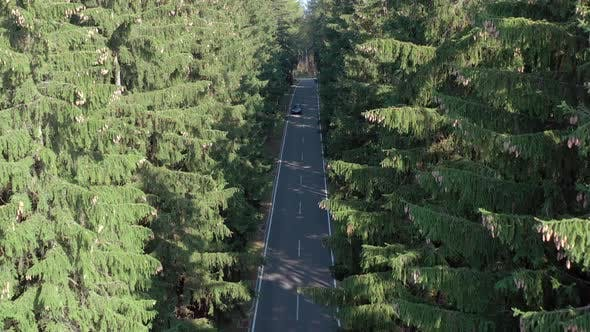 Car On a Journey Through a Forest Road