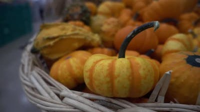 Small Pumpkins In A Weed Basket