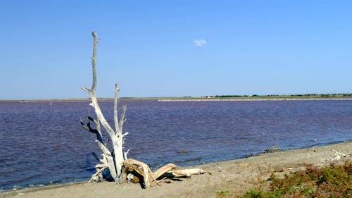 Big Snag Thrown Ashore