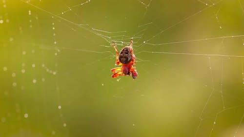 Raindrops on the Spider Web. Cobwebs in Small Drops of Rain.