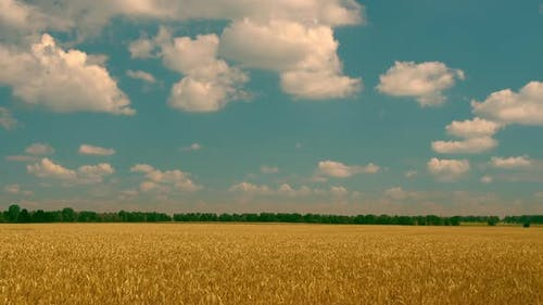 White Clouds Moving Above the Yellow Field