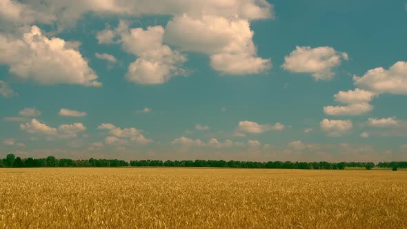 Thumbnail for White Clouds Moving Above the Yellow Field