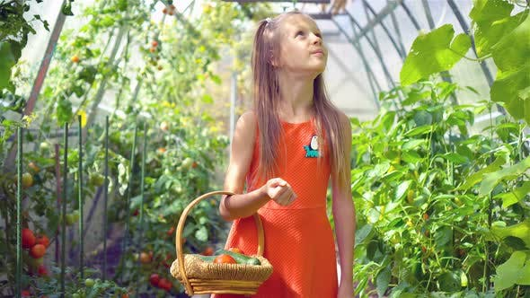 Thumbnail for Cute Little Girl Collects Crop Cucumbers and Tomatos in Greenhouse