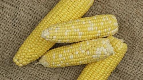 Corn Cobs on Sackcloth Background