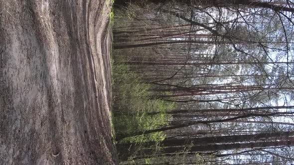 Vertical Video of a Road in the Forest