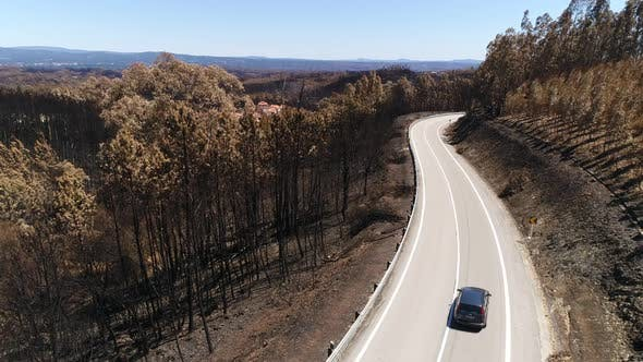 Thumbnail for Car Crossing Road Surrounded by Burned Forest