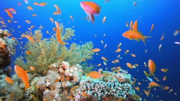 Thumbnail for Underwater Background World