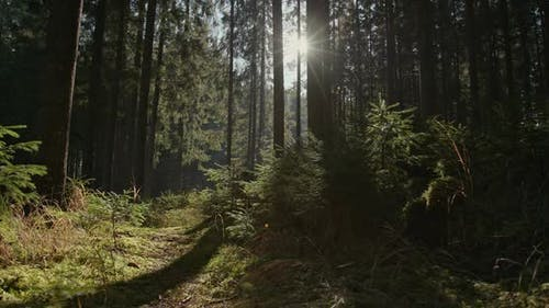 Fascinating Nature and Beauty of the Forest. Peace Without People Is the Mighty Nature of the Forest