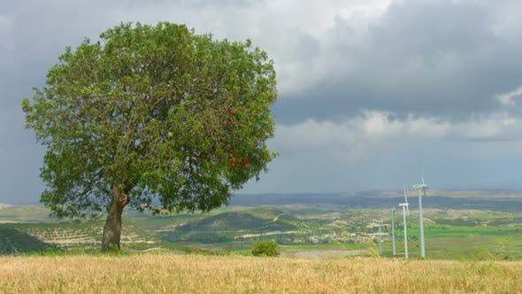 Thumbnail for Green Tree Grows in Field, Wind Turbines Spin, Beautiful Landscape, Time-Lapse