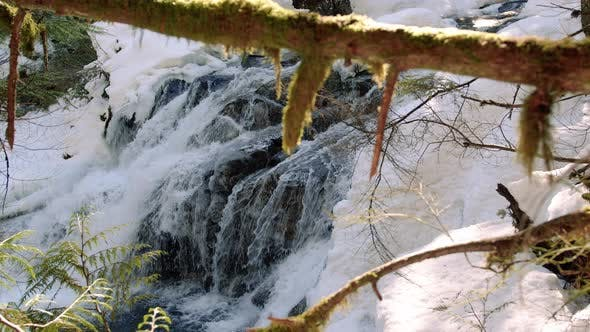 Thumbnail for Mossy Pacific Northwest Tree Branch Dolly Reveal Of Snowy Waterfall