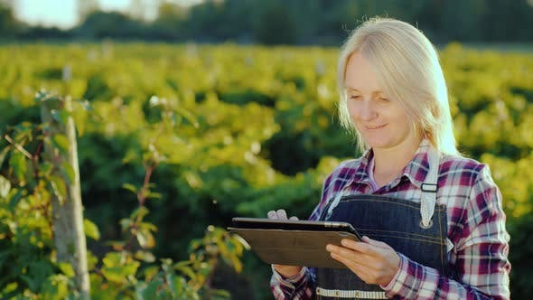 Cover Image for A Satisfied Female Farmer Uses a Tablet Near His Garden. Evening Before Sunset