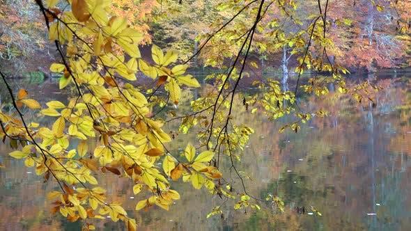 Lac calme dans la forêt jaune d'automne