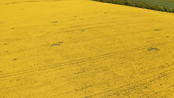 Amazing yellow landscape of a field