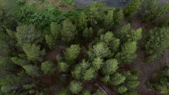 Thumbnail for Slowly flying over tree tops looking down