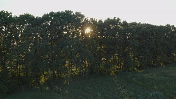 Thumbnail for Rays Of The Sun Through The Trees