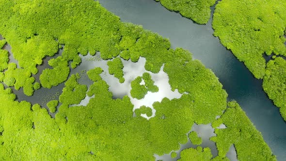 Thumbnail for Aerial View of Mangrove Forest and River.