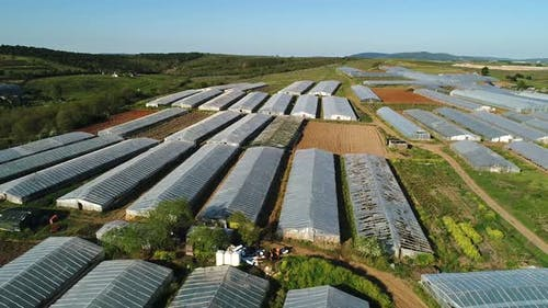 Industrial Agricultural Greenhouses