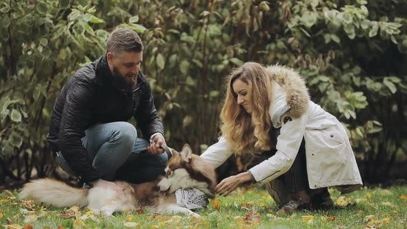 Thumbnail for Man and Woman Caress the Dog Husky Lying on Grass in Park at the Autumn Day, Slow Motion