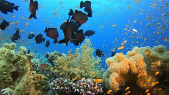 Thumbnail for Underwater Sea Marine Reef